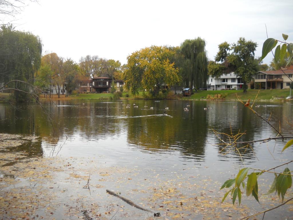 Utah Pond 2